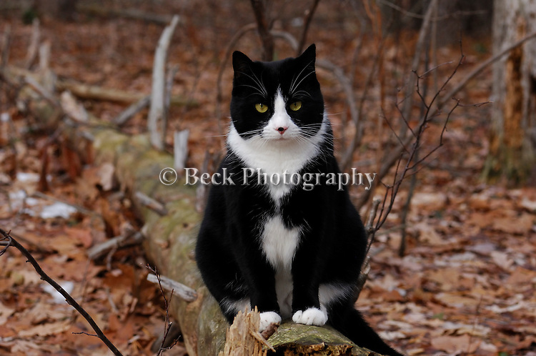 Spooky the cat standing on log, PA