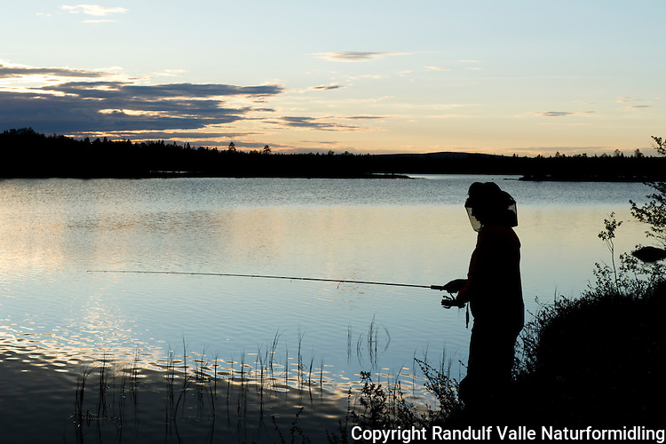 Dame fisker i Pasvik en sommerkveld. ---- Woman angling in Pasvik a summer evening.