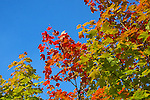 Images of The Canadian Maritime Provinces of Nova Scotia and Prince Edward Island. Fall colours.  Autumn splendor.