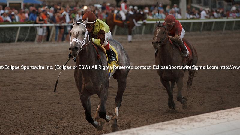 Graydar with Edgar Prado up wins the Donn Handicap (G1) at Gulfstream Park.  Hallandale Beach Florida. 02-13-2013