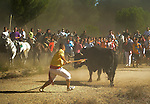 A man stabs the bull during 'Toro de la Vega' festival, on September 13, 2011 in Tordesillas. The festival is one of the oldest in Spain with roots dating back to the fifteenth century. The bull has to be enticed across the river from the village to the plain 'Vega' before it can be killed to honour the 'Virgen de la Pena'.   © Pedro ARMESTRE.