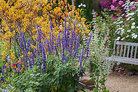 Salvia 'Mystic Spires' blue ornamental sage in colorful California flower garden with Kangaroo Paws