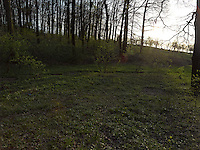 FOREST_LOCATION_90221