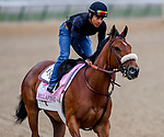 LOUISVILLE, KENTUCKY - APRIL 30: Bellafina, trained by Simon Callaghan, exercises in preparation for the Kentucky Oaks at Churchill Downs in Louisville, Kentucky on April 30, 2019. John Voorhees/Eclipse Sportswire/CSM