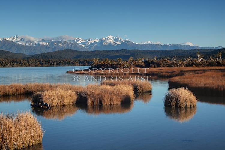 Rushes in the Okarito Lagoon. Westland Region. New Zealand.
