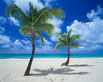 Barbuda, West Indies<br /> Palm trees on a deserted section of  <br /> Coco Point Beach<br /> Caribbean Leeward Islands