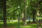 Peaceful Grove.  Photo by Kevin Bain/Ole Miss Communications