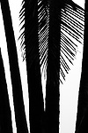 USA, Hawaii, palms in silhouette