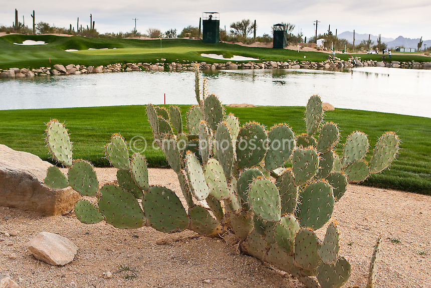 Feb 23, 2009; Marana, AZ, USA; The 3rd green at the Ritz-Carlton Golf Club, Dove Mountain prior to the World Golf Championships-Accenture Match Play Championship.