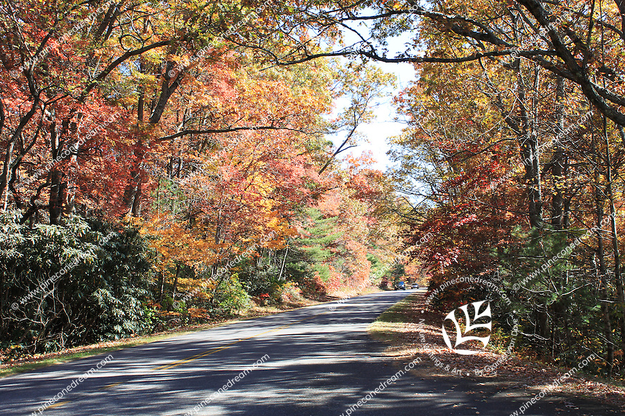 Stock photo - A pass of Blue Ridge Parkway with gorgeous fall trees on both sides of the road, North Carolina, USA.