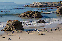 South Africa.  African Penguins at Boulders Beach, near Simon's Town, Western Cape Province.