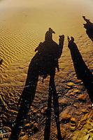 Silhouette of photographer on camel, Thar Desert, Jodhpur, India.