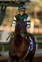 ARCADIA, CA - FEBRUARY 03: Accelerate #3, ridden by Victor Espinoza after the San Pasqual Stakes at Santa Anita Park on February 3, 2018 in Arcadia, California. (Photo by Alex Evers/Eclipse Sportswire/Getty Images)