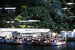 Korean fishing boats moored next to fish factory and palm covered hill in Pago Pago, American Samoa, USA