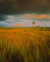 Sawgrass prairies and thunderstorm over the Everglades     Everglades National Park, Florida   Grassy swamplands  Royal Palm  Anhinga Trail