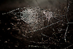 A spiderweb near the SafeGround camp in Sacramento, Calif., January 15, 2011.
