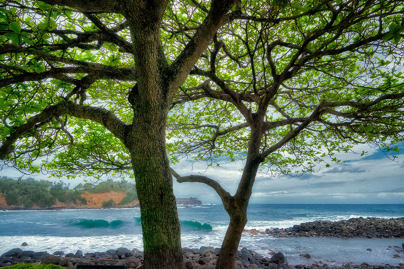 Waves and tree at Keokea Beach Park. Hawaii, The Big Island