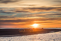 Barrier Islands, Beaufort Sea, Arctic, Alaska.