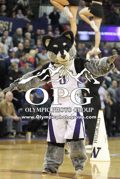 JAN 1, 2016:  Washington Husky mascot Harry entertained fans during the game against UCLA.  Washington defeated #25 ranked UCLA 96-93 in double overtime at Alaska Airlines Arena in Seattle, WA.