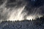 Mist rises over evergreen forest, Skagit Valley, Washington,