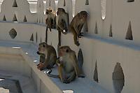 Monkeys Kandy Buddist temple, Palast