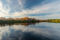 Bald cypress trees on Gator Lake at sunset, Six Mile Cypress Slough, Fort Myers, Florida
