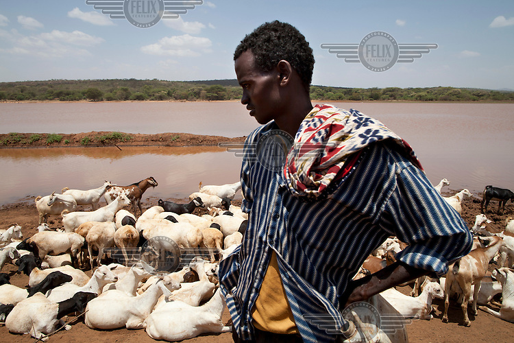 A young shepherd looks over his herd of sheep and goats at the edge of Beke Pond, a vital water source for pastoralists living in the area.