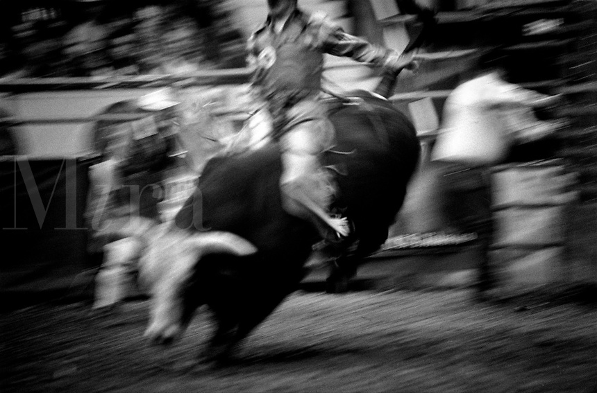 Black & white image of a rodeo - Cowboy rides bull while others scatter. United States Rodeo.