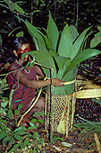 A-Ukre village, Xingu, Brazil. Kayapo woman collecting  Brazil nuts to a basket.