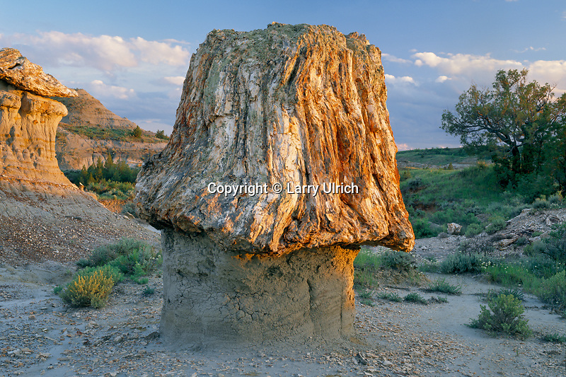 Petrified sequoia stump<br />