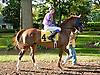 Tu For the Money before The Delaware Park Arabian Juvenile Championship (gr 3) at Delaware Park on 9/28/13