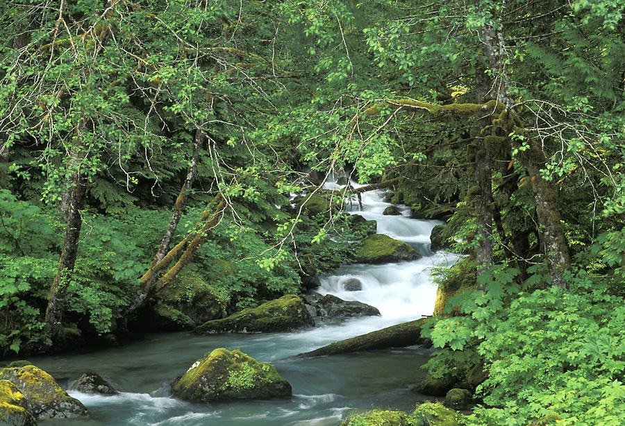 Elliot Creek, Mountain Loop Highway, Darrington, Washington