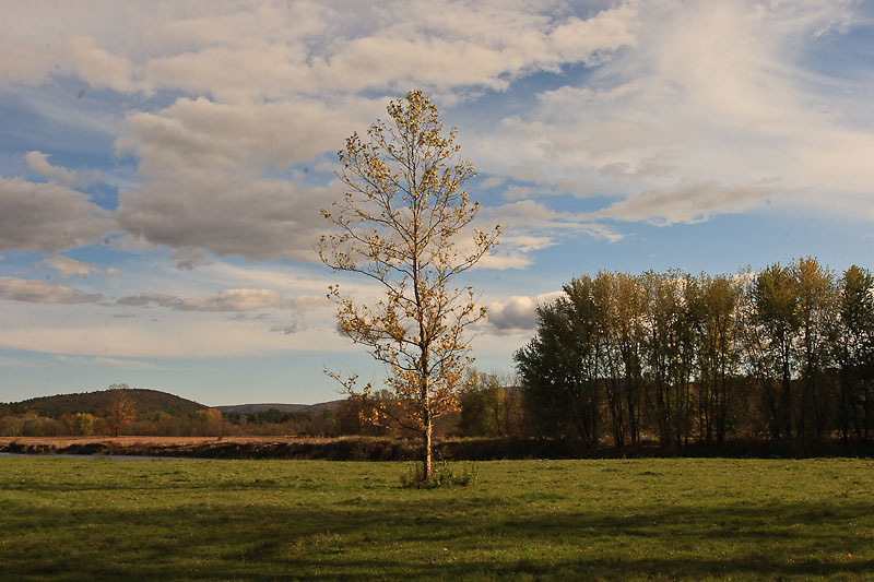 Berkshires (Massachusetts) landscape with single tree on flat meadow.