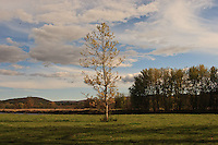 Berkshires (Massachusetts) landscape with single tree on flat meadow.