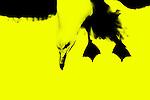 Yellow 16