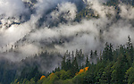 Ross Lake National Recreation Area, WAshihgton:<br /> Rising fog and mist on the flanks of the North Cascades