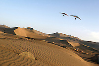 Hangliders carrying tourists fly above a graveyard that is slowly being covered by the encroaching sand. Desertification is the process by which fertile land becomes desert, typically as a result of drought, deforestation, or inappropriate agriculture. Dunhuang, Gansu Province. China