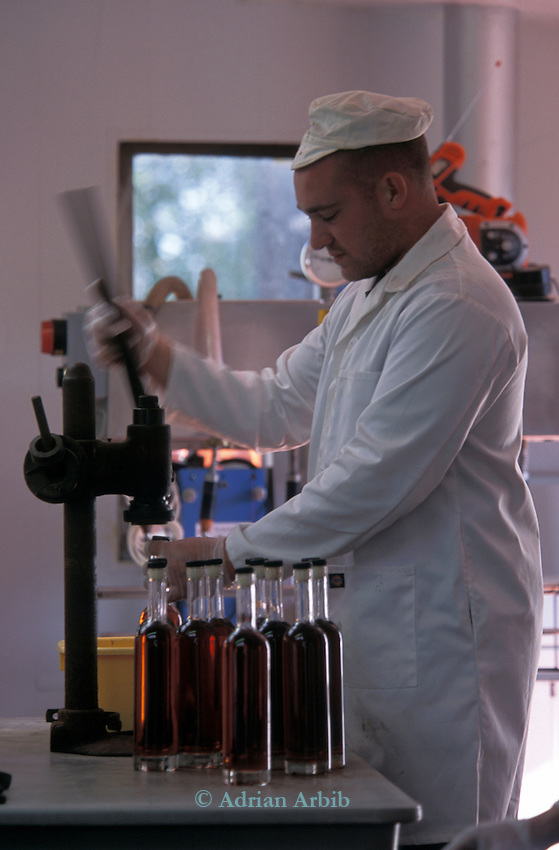 Bottling Pomona at the  Cider Brandy Company in Kingsbury Episcopi. .Julian Temperley who owns the company uses Kingston Black apples for most of his cider production but mixes in other varieties for flavour.