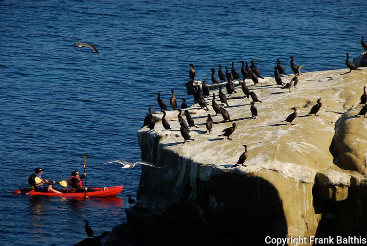 Sea kayakers and cormorants