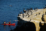 Sea kayakers and cormorants