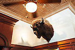 A bison trophy above the bar in Ted's Montana Grill in downtown Atlanta.