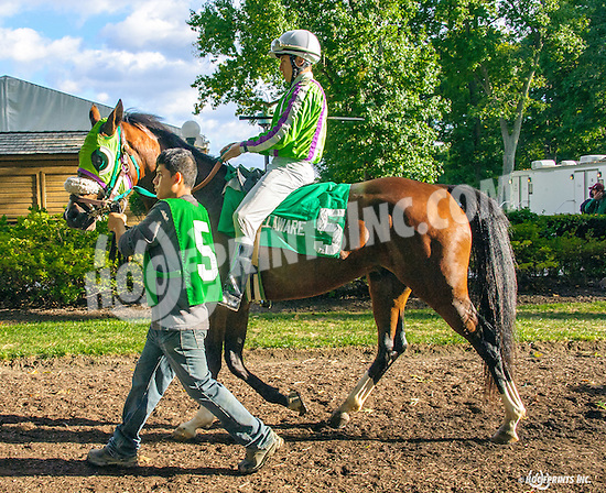 Madjikman before The Arabian Juvenile Championship (grade 3) at Delaware Park on 9/24/16