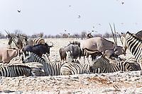 Oryx, Zebra and Wildebeeste at waterhole, Etosha NP, Namibia