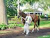 Miss Moonshine at Delaware Park on 9/2/15