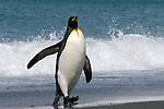 Ioffe,Sailing to South G.OOE.Expedition,Antarctic Peninsula
