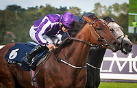 DUBLIN - SEPTEMBER 09: Hydrangea #6, ridden by Wayne Lordan, wins the Matron S. G1, Win and You're In for the Breeders' Cup Filly and Mare Turf, at Leopardstown Racecourse in Leopardstown, Co. Dublin, Ireland. (Photo by Sophie Shore/Eclipse Sportswire/Getty Images)