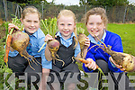 GRUB'S UP: Miriam Hanlon, Aideen O'Carroll and Aoife Dillon with some of the produce from the vegetable garden at Asdee national school.