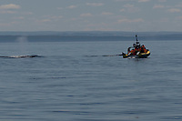 Tourists watch fin whales from a Zodiac in the Saint Lawrence near Tadoussac, Quebec.
