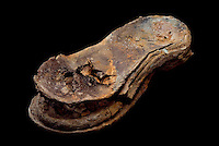 SAVEOCK WATER, CORNWALL, ENGLAND - AUGUST 03: A detail of leather shoe sole on August 3, 2008 in Saveock Water, Cornwall, England. It was in a votive pool by archaeologist Jacqui Wood who dates it between the medieval period to the 17th century (no carbon dating). (Photo by Manuel Cohen)