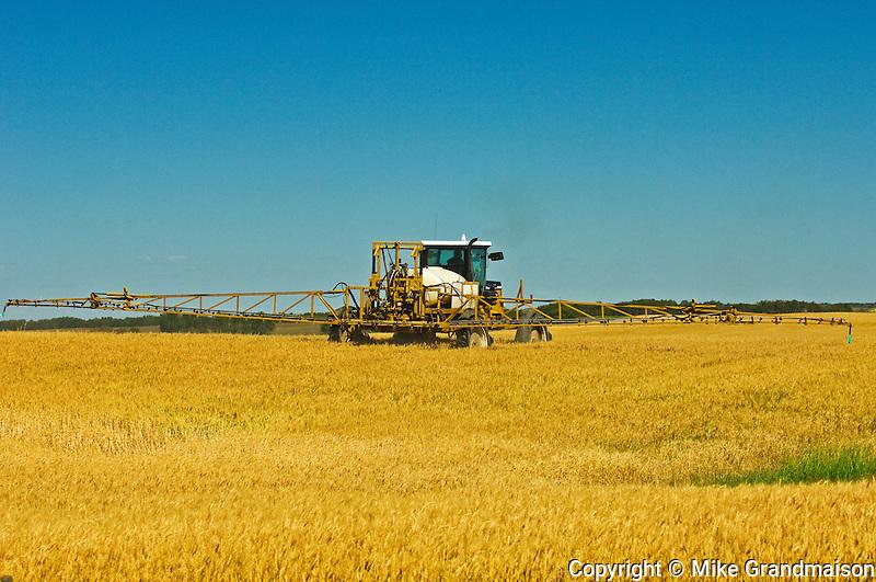 applying herbicide (Roundup1) on Wheat var. Superb<br /> Fairlight<br /> Saskatchewan<br /> Canada